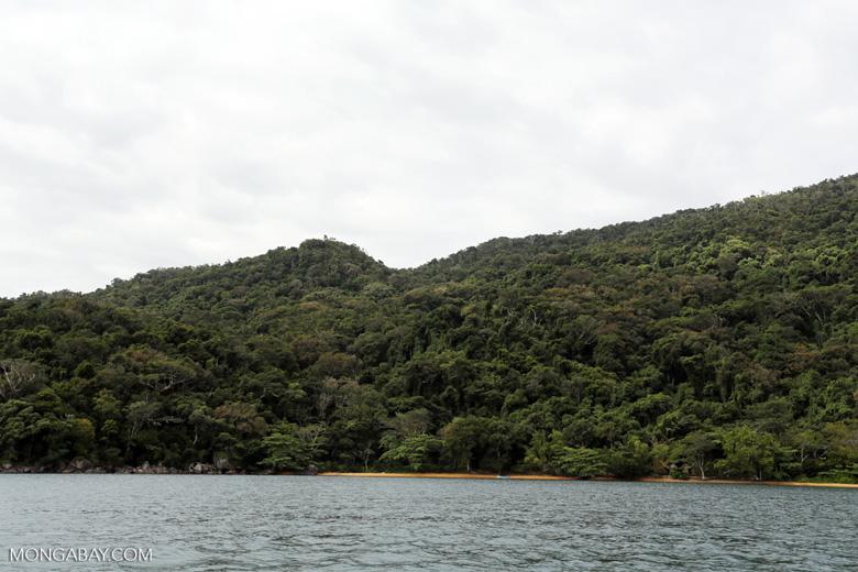 Rainforest on Nosy Mangabe [madagascar_maroantsetra_0222]