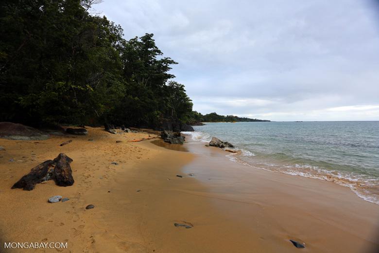 Beach on the Masoala Peninsula [madagascar_masoala_0041]