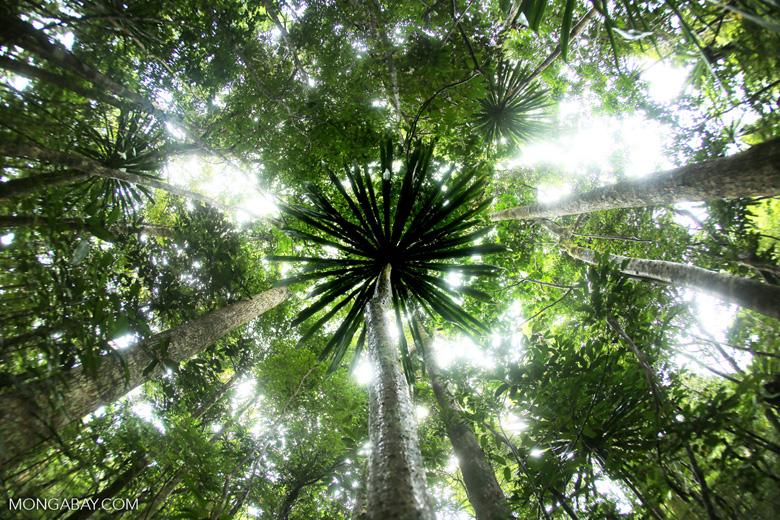 Masoala rainforest [madagascar_masoala_0199]