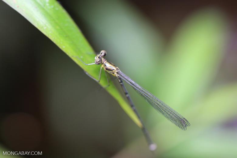 Dragonfly [madagascar_masoala_0294]