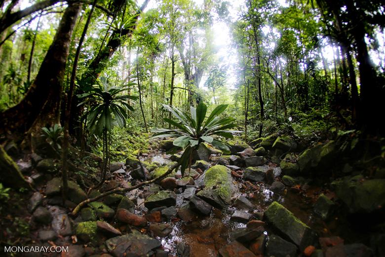 Madagascar rainforest [madagascar_masoala_0342]