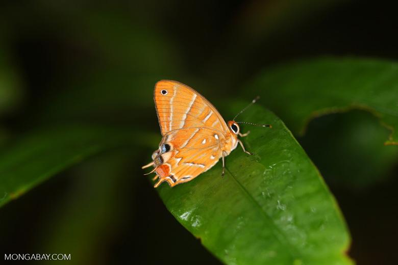 Butterfly [madagascar_masoala_0492]