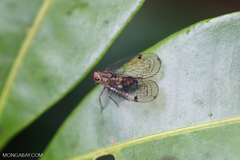Insect [madagascar_masoala_0588]