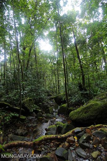 Masoala rainforest creek [madagascar_masoala_0639]