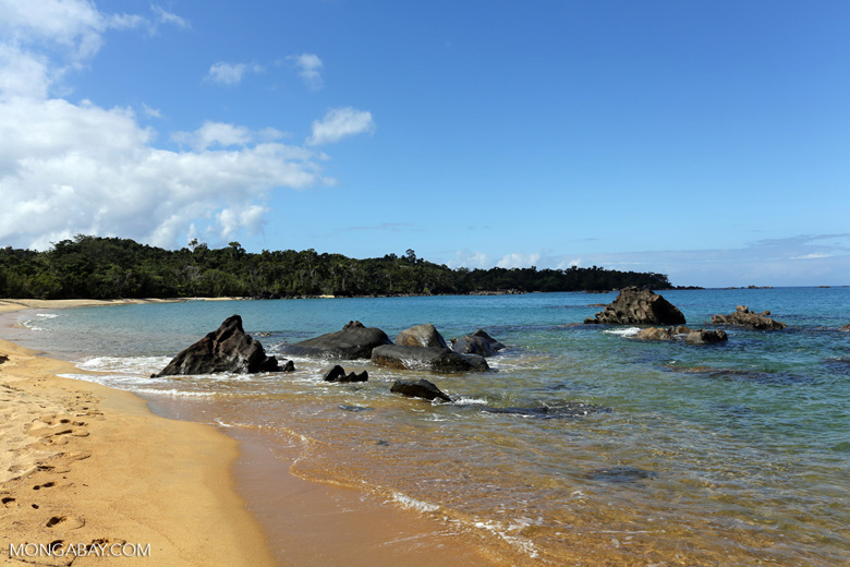 White sand beach at Tampolo on the Masoala Peninsula . Photo by Rhett A. Butler