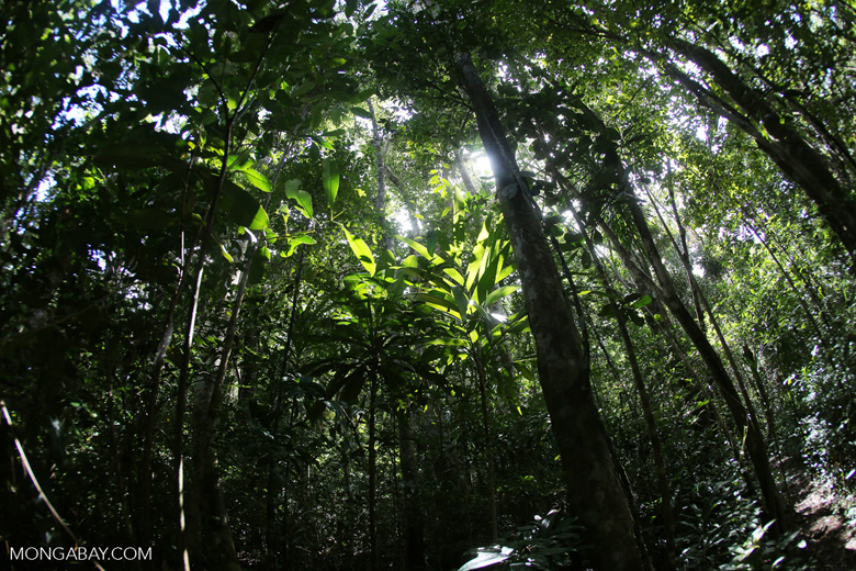 Rainforest at Tampolo