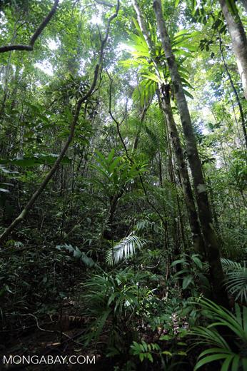 Rainforest at Tampolo on the Masoala Peninsula [madagascar_masoala_0743]