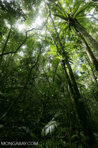 Rainforest at Tampolo [madagascar_masoala_0744]