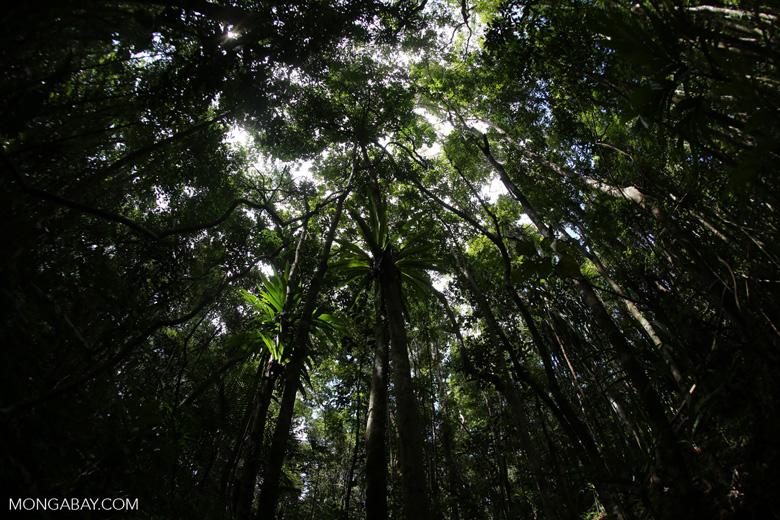 Rainforest at Tampolo [madagascar_masoala_0750]