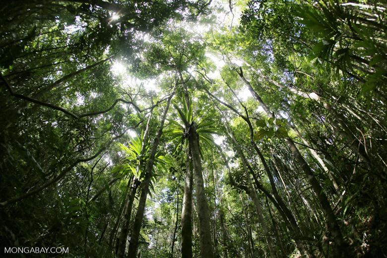 Rainforest at Tampolo on the Masoala Peninsula [madagascar_masoala_0751]