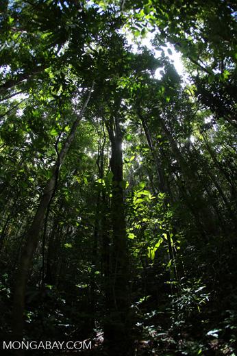 Rainforest at Tampolo [madagascar_masoala_0756]