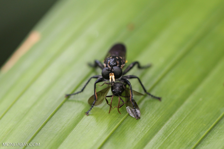 Insect [madagascar_masoala_0770]