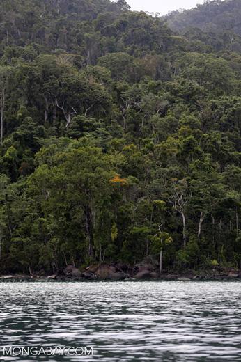 Masoala rainforest [madagascar_masoala_0983]