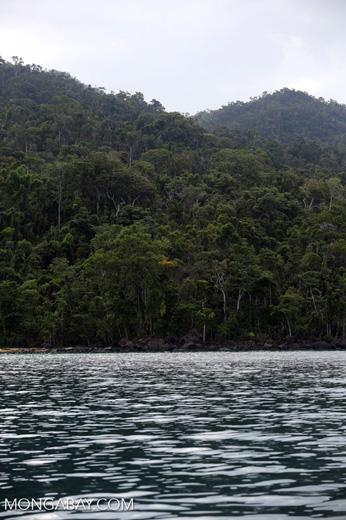 Masoala rainforest [madagascar_masoala_0984]