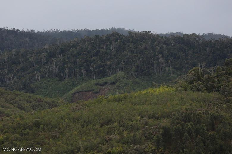 Deforestation near Andasibe-Mantadia National Park in Madagascar [madagascar_perinet_0067]
