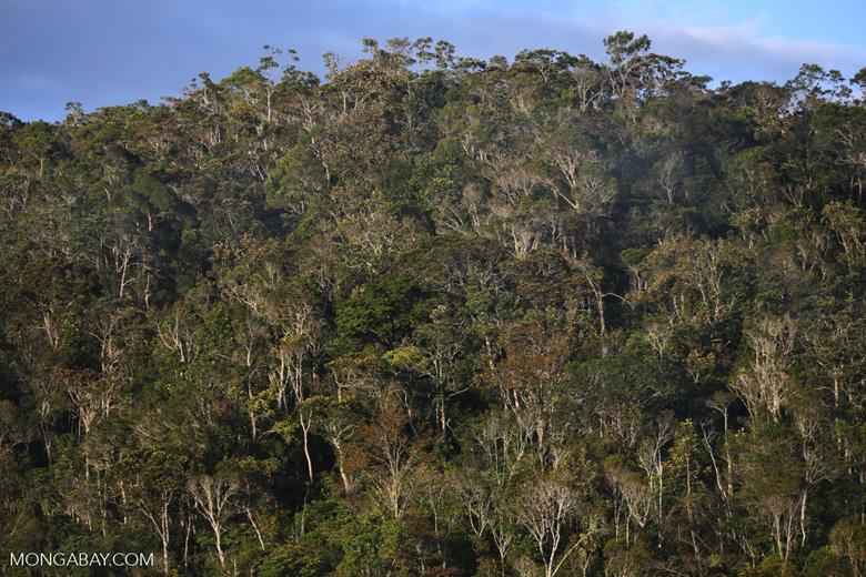 Rainforest of Andasibe-Mantadia National Park in Madagascar [madagascar_perinet_0101]