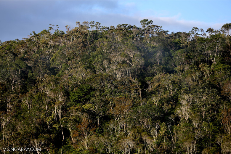 Rainforest of Andasibe-Mantadia National Park in Madagascar [madagascar_perinet_0103]