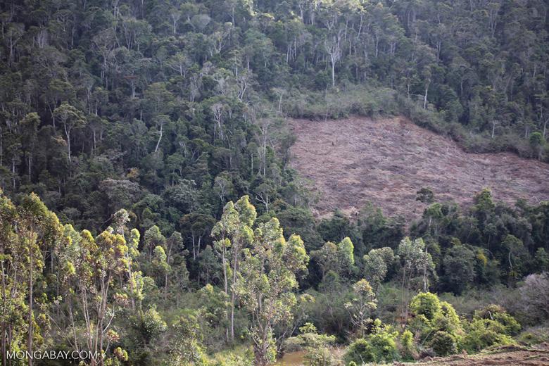 Deforestation near Andasibe-Mantadia National Park [madagascar_perinet_0249]