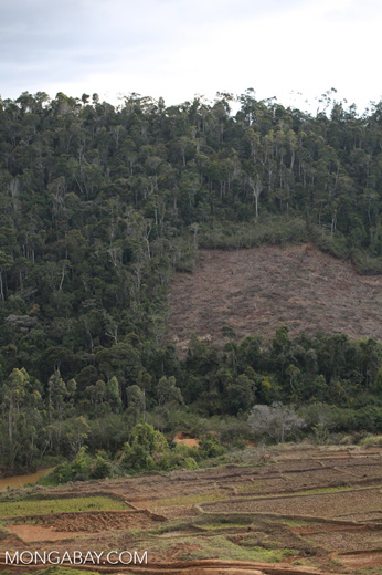 Deforestation near Andasibe-Mantadia National Park [madagascar_perinet_0258]