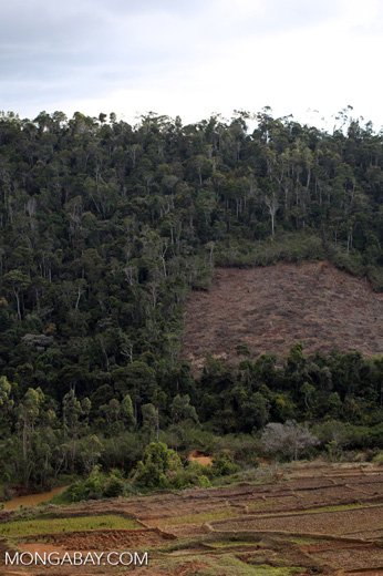 Deforestation near Andasibe-Mantadia National Park [madagascar_perinet_0262]