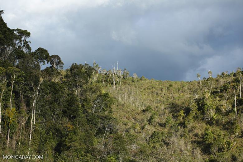 Scrub outside a Mantadia N.P. in Madagascar