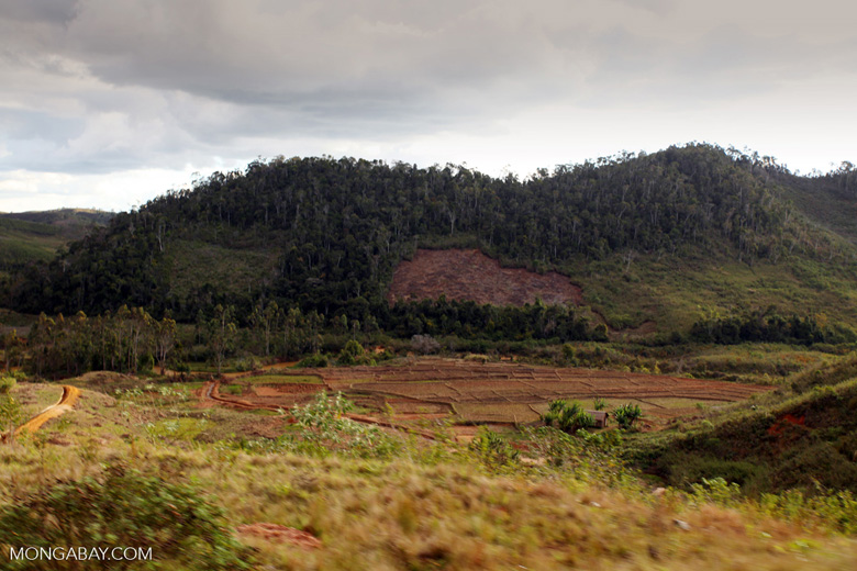 Slash and burn agriculture near Perinet, Madagascar circa 2012. Image by Rhett A. Butler.