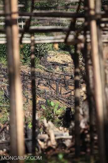 Slash-and-burn in Madagascar [madagascar_perinet_0605]