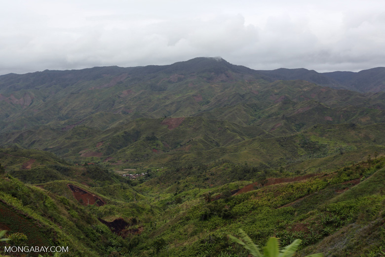 Slash and burn of Madagascar's rainforest [madagascar_tamatave_0137]