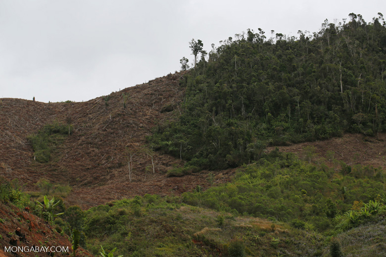 Slash and burn clear-cutting of Madagascar's rain forest [madagascar_tamatave_0158]