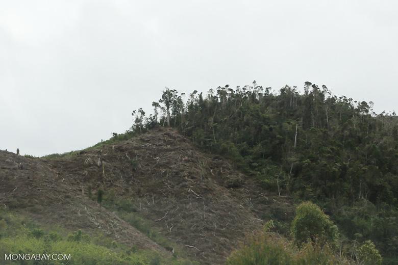 Slash and burn clear-cutting outside Perinet [madagascar_tamatave_0163]