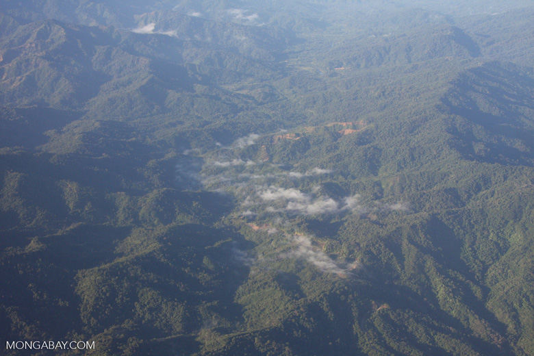 Forested mountains of Borneo (logging roads)