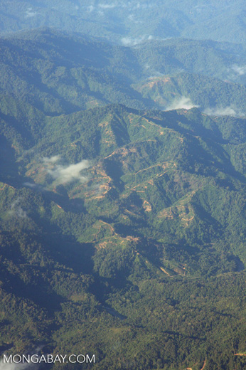 Aerial view of logging roads in Borneo -- borneo_2734
