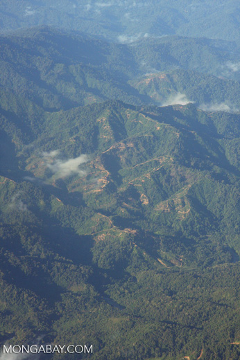 Aerial view of logging roads in Borneo