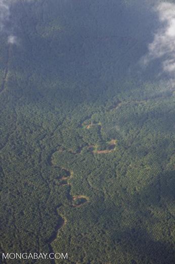 Matrix of oil palm -- borneo_2782