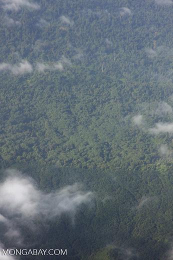 Oil palm plantation and logged over rain orest