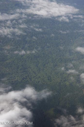 Oil palm plantation and logged rainforest