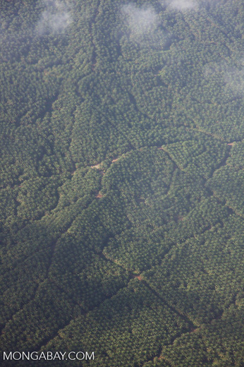 Aerial view of an oil palm estate