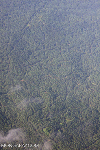 Aerial view of an oil palm estate -- borneo_2791