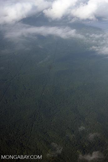 Aerial view of an oil palm plantation in Borneo -- borneo_2792