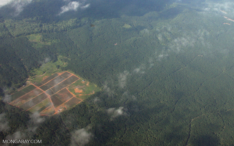 Aerial view of an oil palm plantation in Borneo -- borneo_2796
