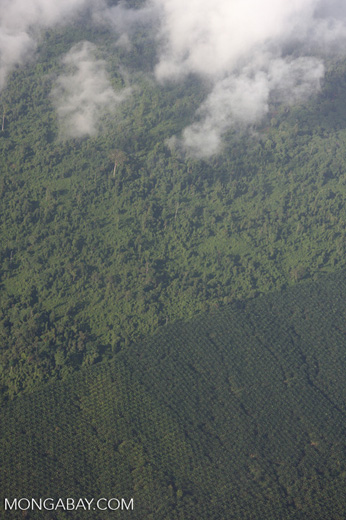 Aerial view of an oil palm estate and a heavily logged natural forest