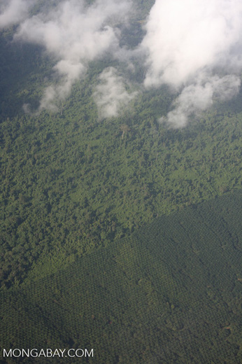 Aerial view of an oil palm plantation and a heavily logged natural forest -- borneo_2802