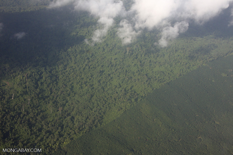 Aerial view of an oil palm plantation and a heavily logged natural forest -- borneo_2803