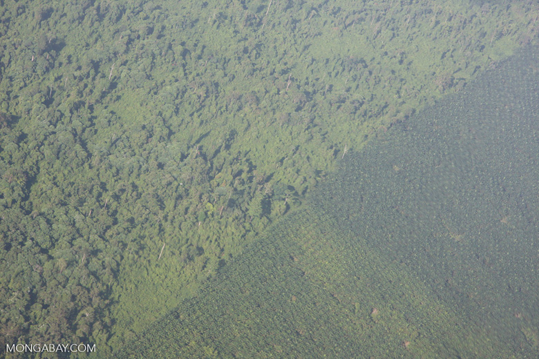 Aerial view of an oil palm plantation and a heavily logged natural forest -- borneo_2805