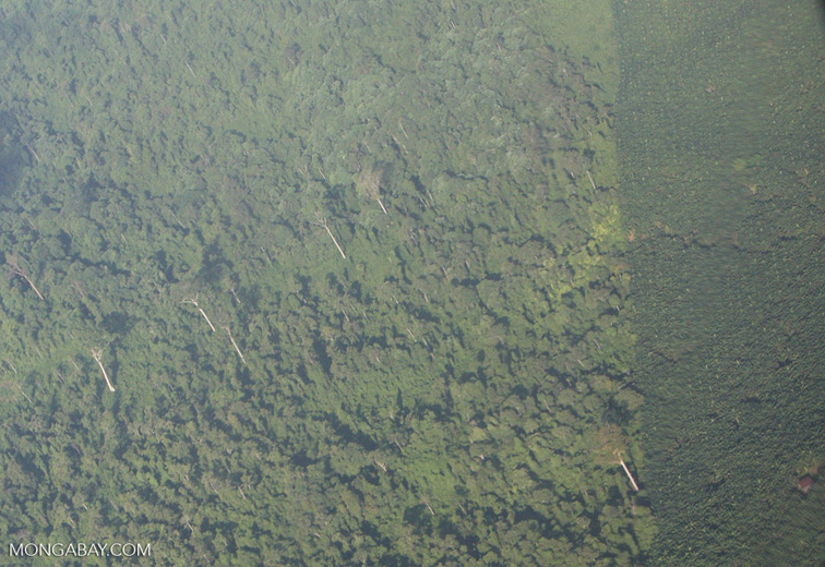 Aerial view of an oil palm plantation and a heavily logged natural forest -- borneo_2806a