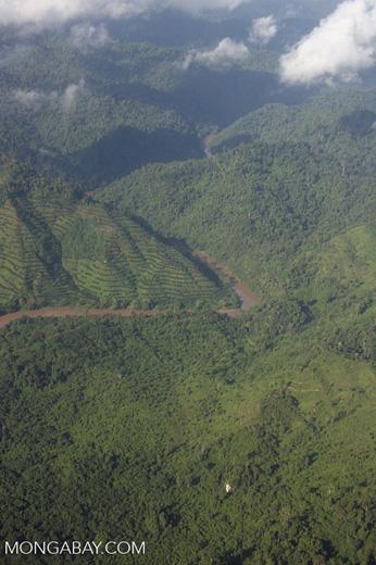 Terraced oil palm plantations -- borneo_2812