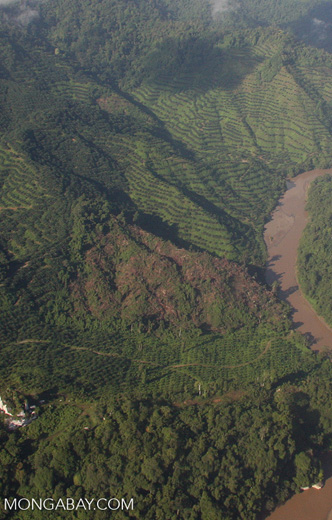 Deforestation for oil palm -- borneo_2814a