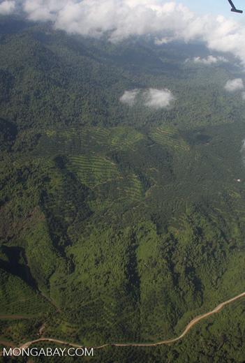 Oil palm plantations in Malaysian Borneo -- borneo_2819