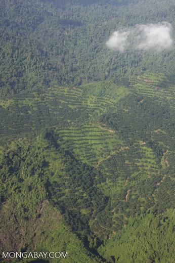 Oil palm plantations in Malaysian Borneo -- borneo_2821