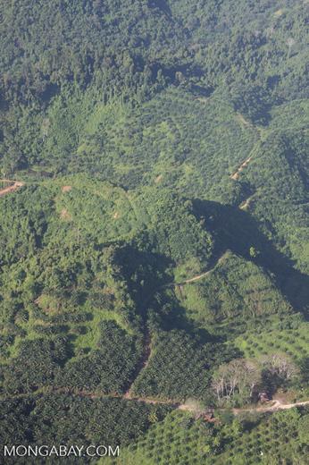 Oil palm plantations in Malaysian Borneo -- borneo_2822